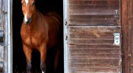 Adopting an abused horse