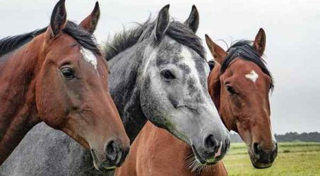 10 Popular Types of Horses in the USA