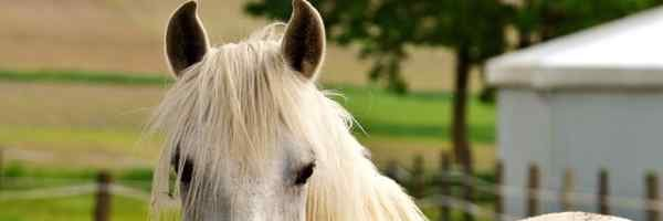 Abused Horses – How to Recognize Equine Abuse